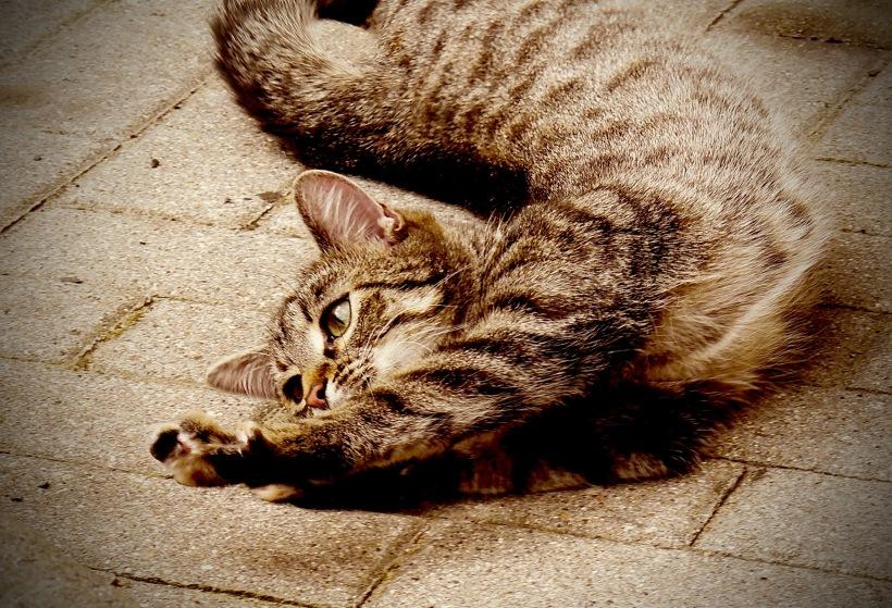 kittie - 1